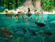 shanghai ocean aquarium wikipedia