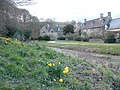 Early daffodils, Upper Slaughter - geograph.org.uk - 798388.jpg