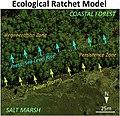 Ecological ratchet model of marsh migration in a forest.jpg