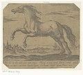 Een paard naar links galopperend Paarden uit verschillende landen (serietitel) His ducibus princeps celebraberis ore viroru illa homines beat haec sideribusq locat (serietitel), RP-P-OB-207.829.jpg