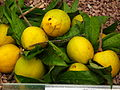 Egg Fruit from Lalbagh Flower Show August 2012 4713.JPG