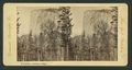 El Capitan, Yosemite Valley, from Robert N. Dennis collection of stereoscopic views.png