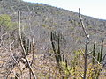 El Triunfo, South Baja California (5761753511).jpg
