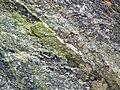 Epidote in gneiss (Precambrian; Rt. 93 roadcut next to the New River, Mouth of Wilson, Virginia, USA) 3 (30917533341).jpg