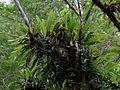 Epiphytes - Flickr - treegrow (1).jpg