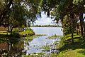 Esteros del Ibera, Corrientes, Argentina, Jan. 2011 - Flickr - PhillipC (1).jpg