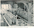 FMIB 32552 Interior of Hatchery at Battery Station Equipped with Hatching-Jars.jpeg
