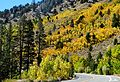 Fall Colors, Rock Creek Road, Sierra Nevada, CA 9-16 (29402006653).jpg