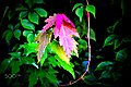 Fall Leaves (130328743).jpeg