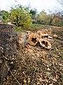 Fallen tree (11162344203).jpg