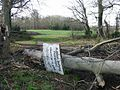 Fallen tree in the Summerhouse Plantation - geograph.org.uk - 675167.jpg