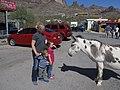 Family vs. Burro, Oatman, Arizona (7280157464).jpg