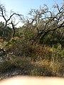 Far West Side, San Antonio, TX, USA - panoramio (8).jpg