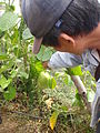 Farmer Romy in his organic LaTop Farm in Benguet, Baguio, Philippines - 3 (10694956223).jpg