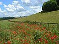 Farmland, Stokenchurch - geograph.org.uk - 882142.jpg