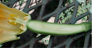 part of the female reproductive organ of the flower
