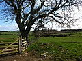 Field boundary at Watchlaw Farm - geograph.org.uk - 354647.jpg