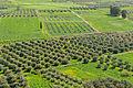 Fields Messara plain from Phaistos Crete Greece.jpg