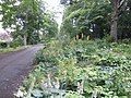 Fine herbaceous border - geograph.org.uk - 503472.jpg