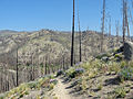 Fisher Creek Trail.JPG