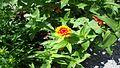 Fleur89.jpg
