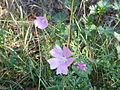 Fleur de sous bois 30 août 2015.JPG