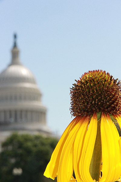 File:Flickr - USCapitol - Dome from the US Botanic Garden.jpg
