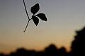 Flickr - ggallice - Pantanal silhouette.jpg