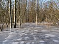 Flooded path with ice in the Teufelsbruch swamp 2.jpg