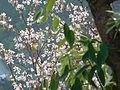 Flora of India 9.jpg