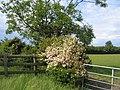 Floral display - geograph.org.uk - 186139.jpg
