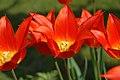 Flore de Bercy 1.jpg