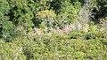 Flores - panoramio (16).jpg