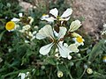 Flores del Valle de Lecrín.jpg