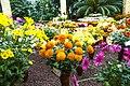 Flori în Habitatul Lor Natural (195138233).jpeg