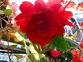 Flower-center141539.jpg
