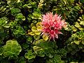 Flower 05644.JPG