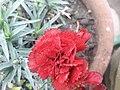 Flower 20181201 091757.jpg