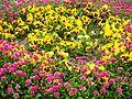 Flowers at Badamwari Garden (14569482983).jpg