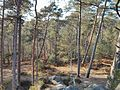 Fontainebleau forest.jpeg