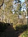 Footpath by woodland - geograph.org.uk - 1186716.jpg