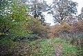 Footpath in Groombridge Place Park - geograph.org.uk - 1588560.jpg