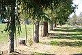 Footpath on a tree farm in Oregon.jpg