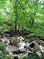 Forêt (Les Planches-près-Arbois) (3).jpg