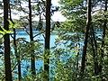 Forêt au bord du lac Pavin.jpg
