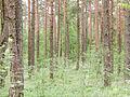 Forest (14391149937).jpg
