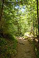 Forest in Yatsugatake 24.jpg