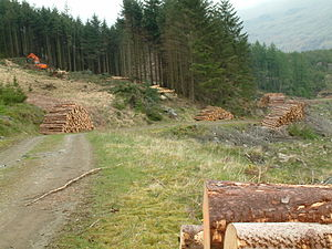Forestry operations on Harter Fell
