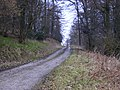 Forestry track in Wainess Hill Wood - geograph.org.uk - 343713.jpg