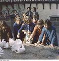 Fotothek df ps 0002619 Burgen ^ Sonstiges ^ Tiere ^ Vögel ^ Tauben.jpg